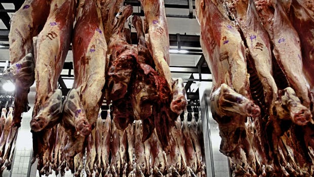 Buscan mayor control en la cadena de carnes