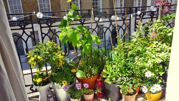 No sab s qu plantas poner en tu balc n te damos algunos for Plantas de balcon para todo el ano
