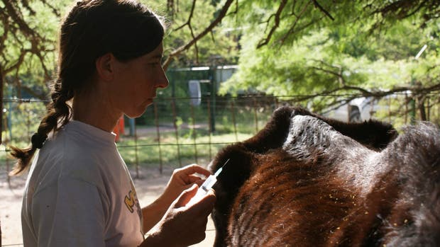 Dueños y voluntarios se encargan de cuidar a los animales que lelgan heridos a la reserva