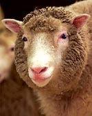 Dolly, el primer mamífero clon