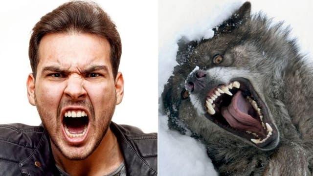 Las expresiones faciales de emoción se mimetizan entre las especies