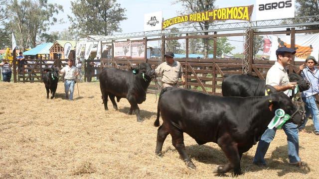 Desfile de ejemplares en la Expo de la Sociedad Rural de Formosa