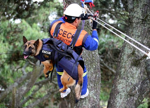 CATASTROFES. Los perros de Acecc rescatan personas y cadáveres en derrumbes, avalanchas o aludes. Foto: LA NACION