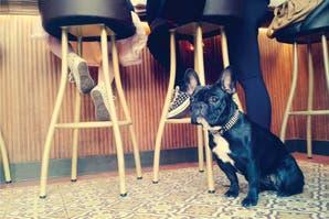 Pet friendly: 5 lugares para ir a comer y llevar a tu mascota