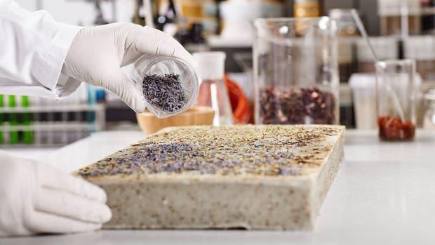 Se estudian las vinculaciones entre los fertilizantes y los bioestimulantes