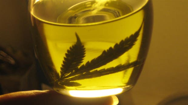 Se reglamentó la Ley de Cannabis Medicinal