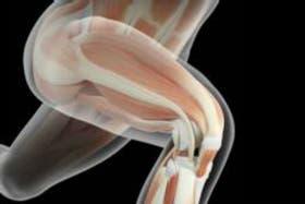 Ahora el desafío es maximizar los beneficios para el cerebro de la actividad física de las piernas