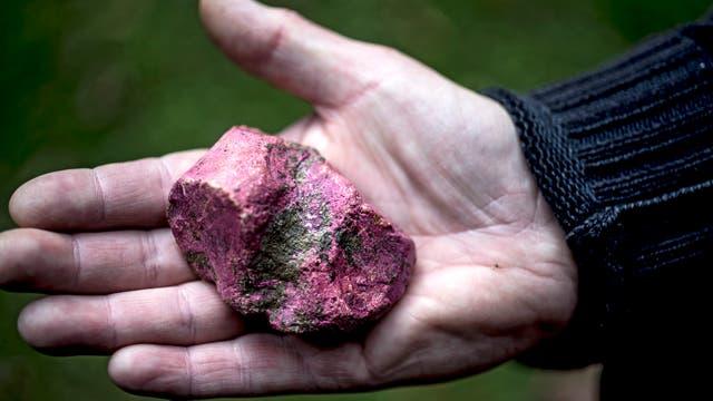 Pedernal cubierto por un alga que se vuelve magenta al contacto con el aire hallado en Blick Mead (Andrew Testa/NYT)
