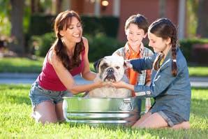 8 claves para tener en cuenta antes de bañar a tu perro