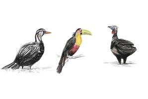 El avistaje de pájaros se vuelve tendencia