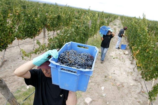 Las uvas, entre los productos con más caída de valor en el período enero-mayo de 2017
