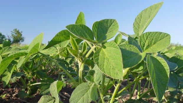 Hay complicaciones para los cultivos en la región núcleo