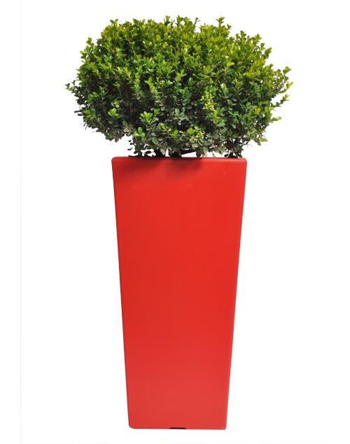 Los topiarios otorgan fuerza y carácter a cualquier espacio. Son ideales para darles atractivo a balcones y terrazas y para crear puntas focales en jardines.