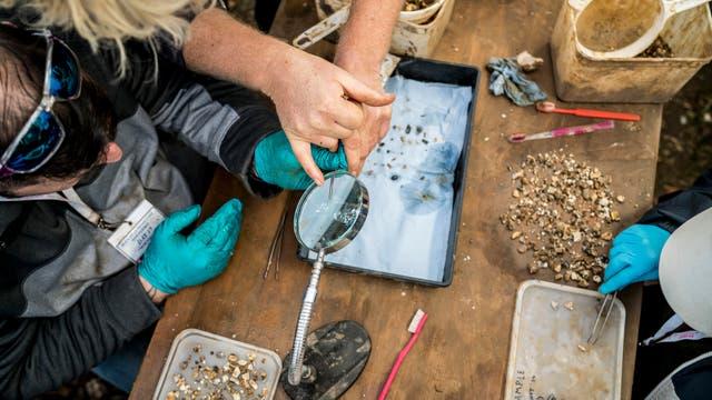 Arqueólogos revisan el yacimiento de Blick Mead para hallar rastros de sus habitantes (Andrew Testa/NYT)