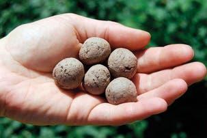¿Qué son y cómo se usan las bombas de semillas?