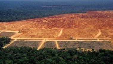 El aumento de bosques en algunas regiones no compensa la deforestación que ocurre en áreas como el Amazonas