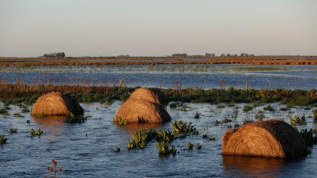 Los campos ganaderos, afectados en la zona de General Madariaga