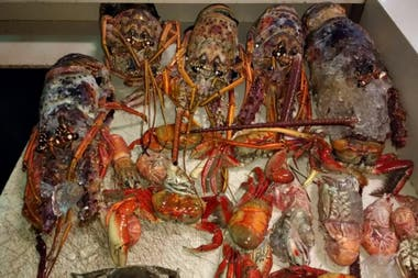 Langostas y cangrejos están entre los productos detectados