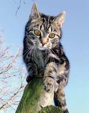 ¿Qué tengo que saber a la hora de tener un gato?