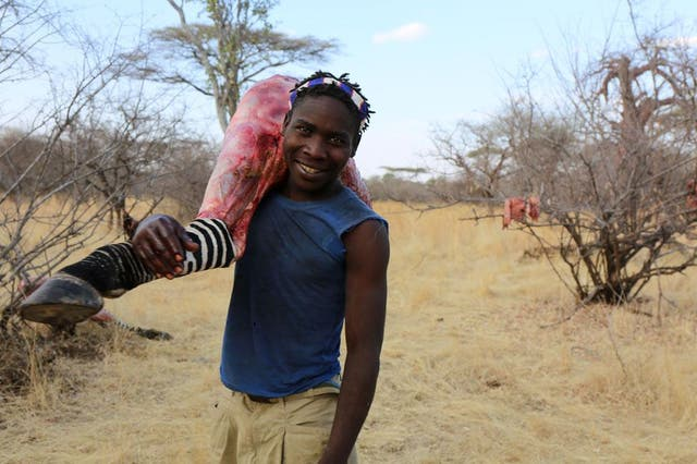 Para cazar animales tan grandes como las cebras usan flechas envenenadas
