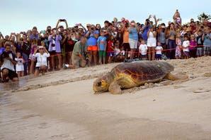 Mirá este tour virtual para proteger a las tortugas marinas