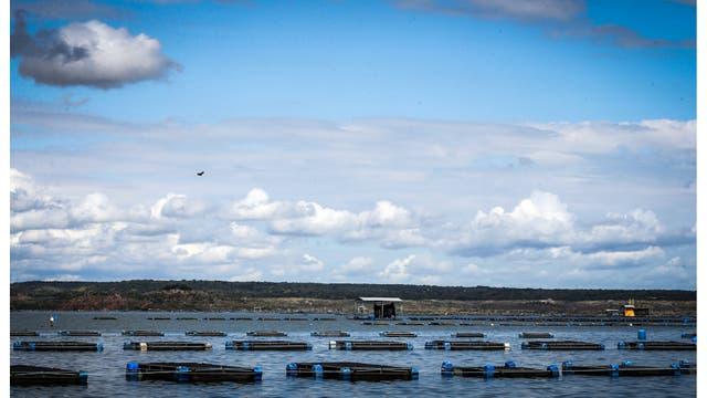 Tanques de tilapia en la presa de Castanhao donde se cultivan los peces y se usan pieles para la investigación de tratamientos de quemaduras, en Jaguaribara, Brasil