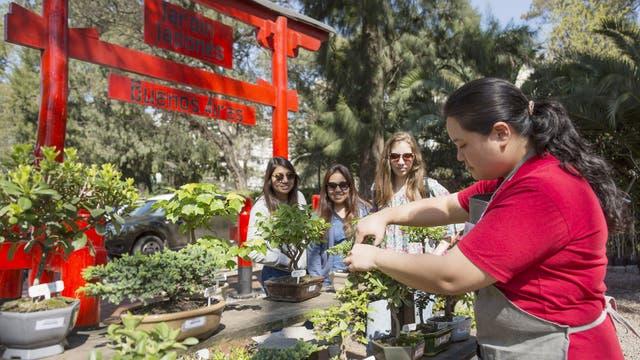 El cultivo de Bonsai convoca cada vez más gente en el Jardín Japones