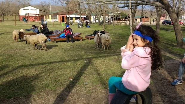 Un día de granja en Pequeña Holanda