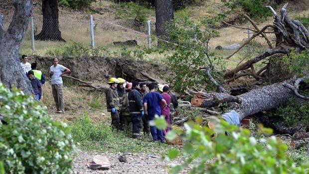 Los grupos de rescate junto al árbol caído que causó la tragedia
