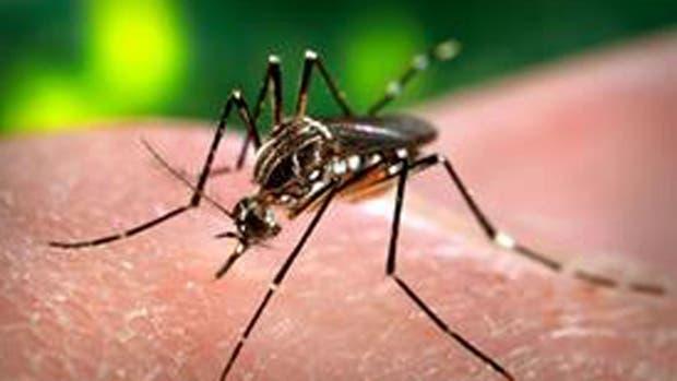 Se conoció el primer caso de dengue