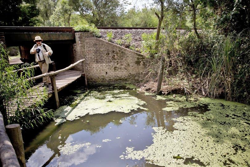 Elevarán a esa categoría de protección ambiental el área que integran las reservas Otamendi y Río Luján; allí viven 309 especies de aves y 49 de mamíferos