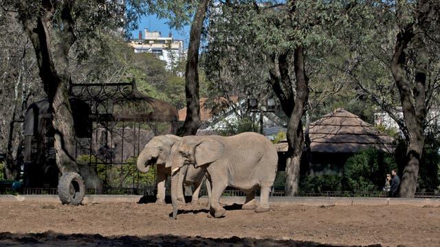 El plan integral de transformación del zoo llevará, por lo menos, seis años