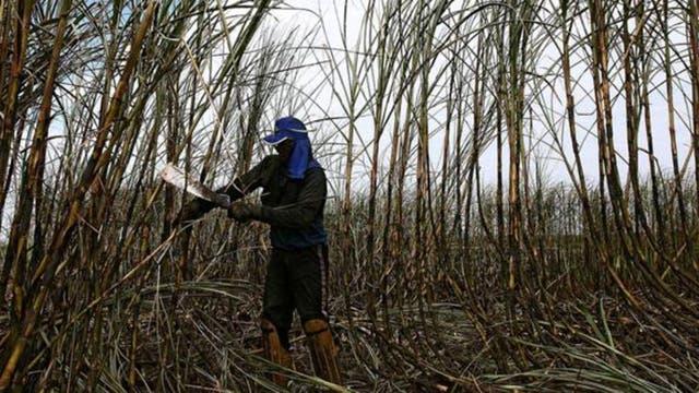 La industria del azúcar de caña en Brasil sigue siendo un duro lugar de trabajo hoy día