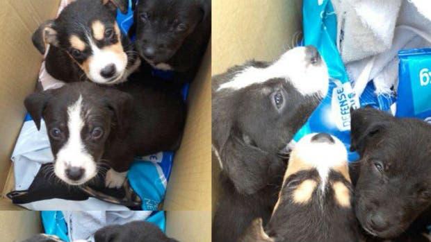 Tiraron a seis perritos en un container de basura en Villa Santa Rita