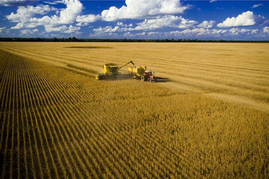 Vista parcial de la 10.000 ha de soja. Foto: http://lamoraleja.com.ar