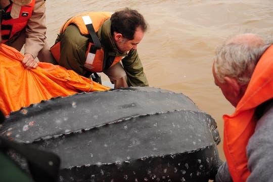 El Zoo de Buenos Aires rescató a Jorgela, una hembra adulta de tortuga laúd cuya longitud de caparazón es de 1,44 mts y pesa 220 kg. Foto: Zoo de Buenos Aires