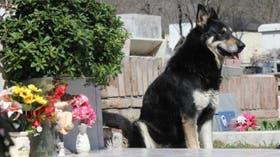 El perro dejó la casa hace seis años, cuando murió uno de sus dueños