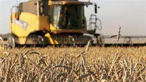 No prevén un impacto importante para el cereal argentino por la eventual apertura sin aranceles para el trigo de otros mercados