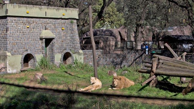 Todavía hay en el zoo unos 1300 animales y el objetivo es sólo queden 350