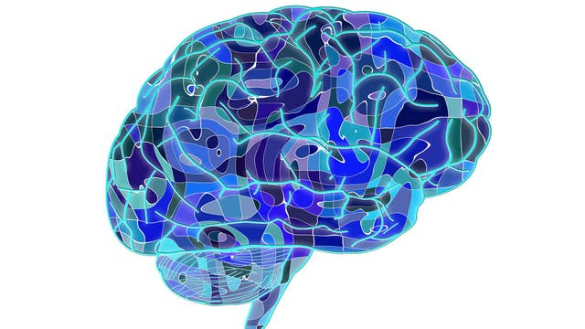 A pesar de que se sabe que muchos genes aumentan la vulnerabilidad de una persona a desarrollar una enfermedad mental, lo que en realidad la causa es todo lo demás: las experiencias de la vida