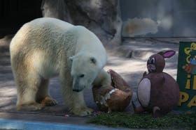 Winner, el último oso polar que vivió en el Zoo