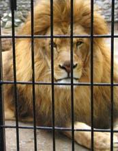 ¿El fin de los zoológicos?