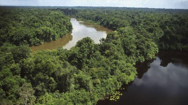 """""""La Amazonía no es tan prístina e intacta como parecía"""", señaló el investigador Hans ter Steege"""