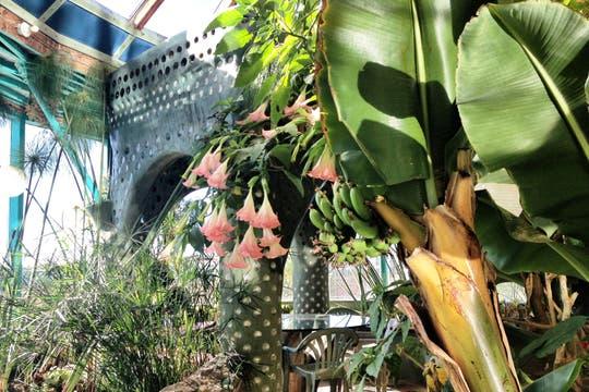 Las huertas internas son una de las características de las casas de Reynolds. Foto: LA NACION / Gentileza fundación Michael Reynolds