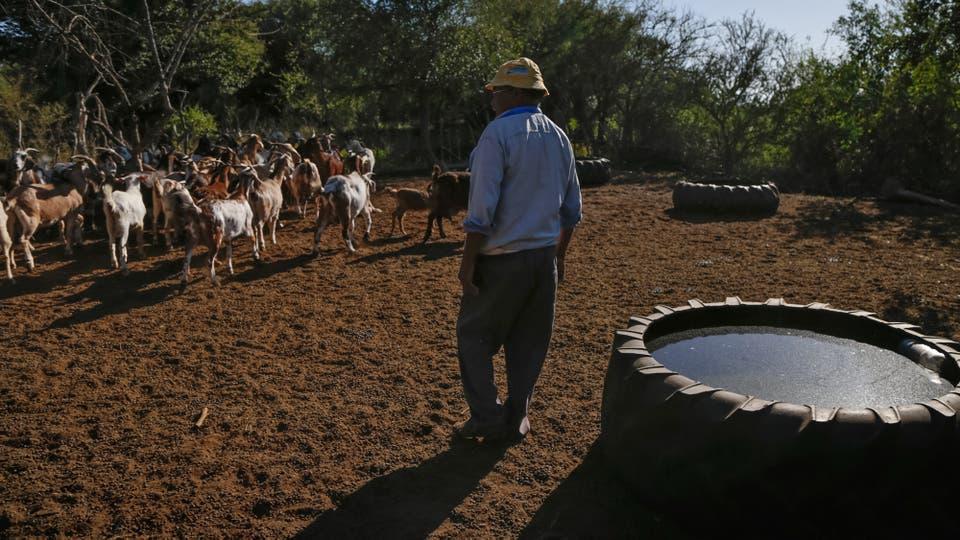 Vive de sus cabras y de una jubilación . Foto: LA NACION / Diego Lima