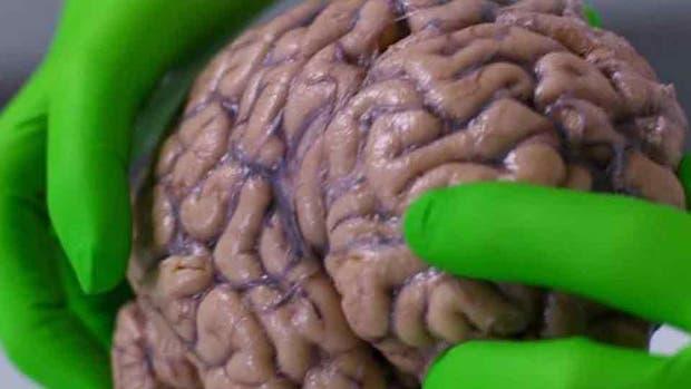 El cerebro humano es el organismo más complejo del planeta