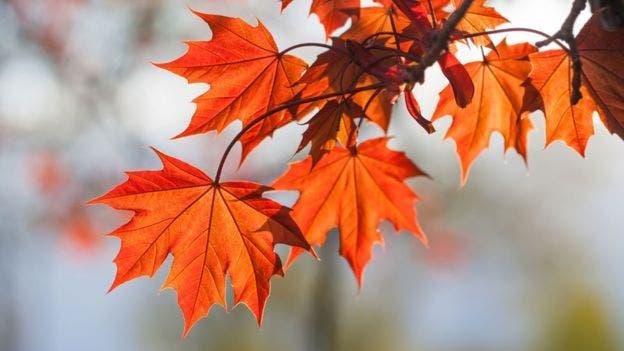 Los árboles reducen la temperatura en unos dos grados centígrados, un impacto crucial durante olas de calor