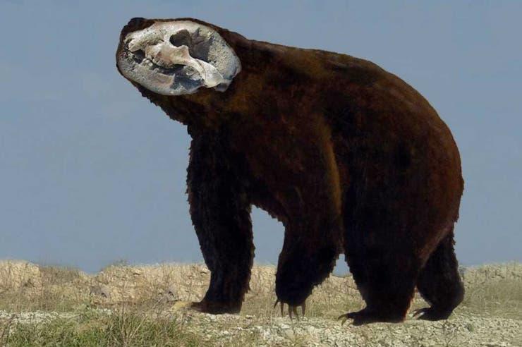 Hallan restos de un oso gigante en Argentina