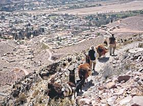 Caravana de llamas hacia la Garganta del Diablo, dirigida por el porteño Santos Manfredi, que hace diez años cambió la ciudad por la montaña