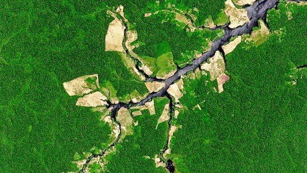 El ritmo de desforestación disminuyó en Brasil, pero aumentó dramáticamente en otros países como Perú
